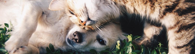 EBAVET. Etología y Bienestar Animal