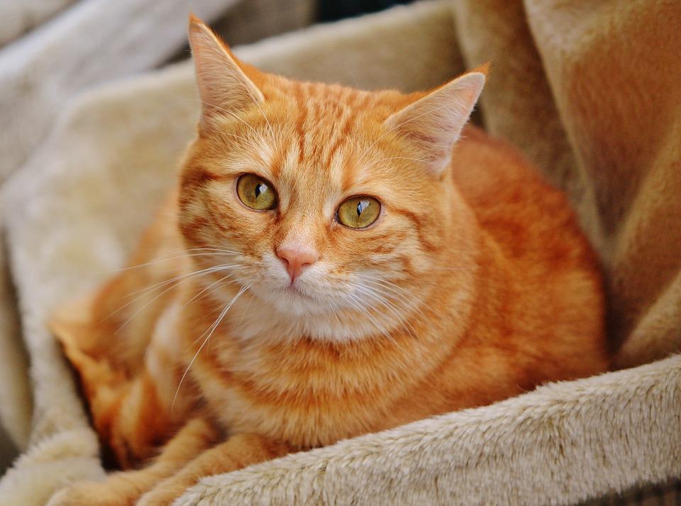 cat-1044755_960_720