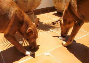 helado casero perros