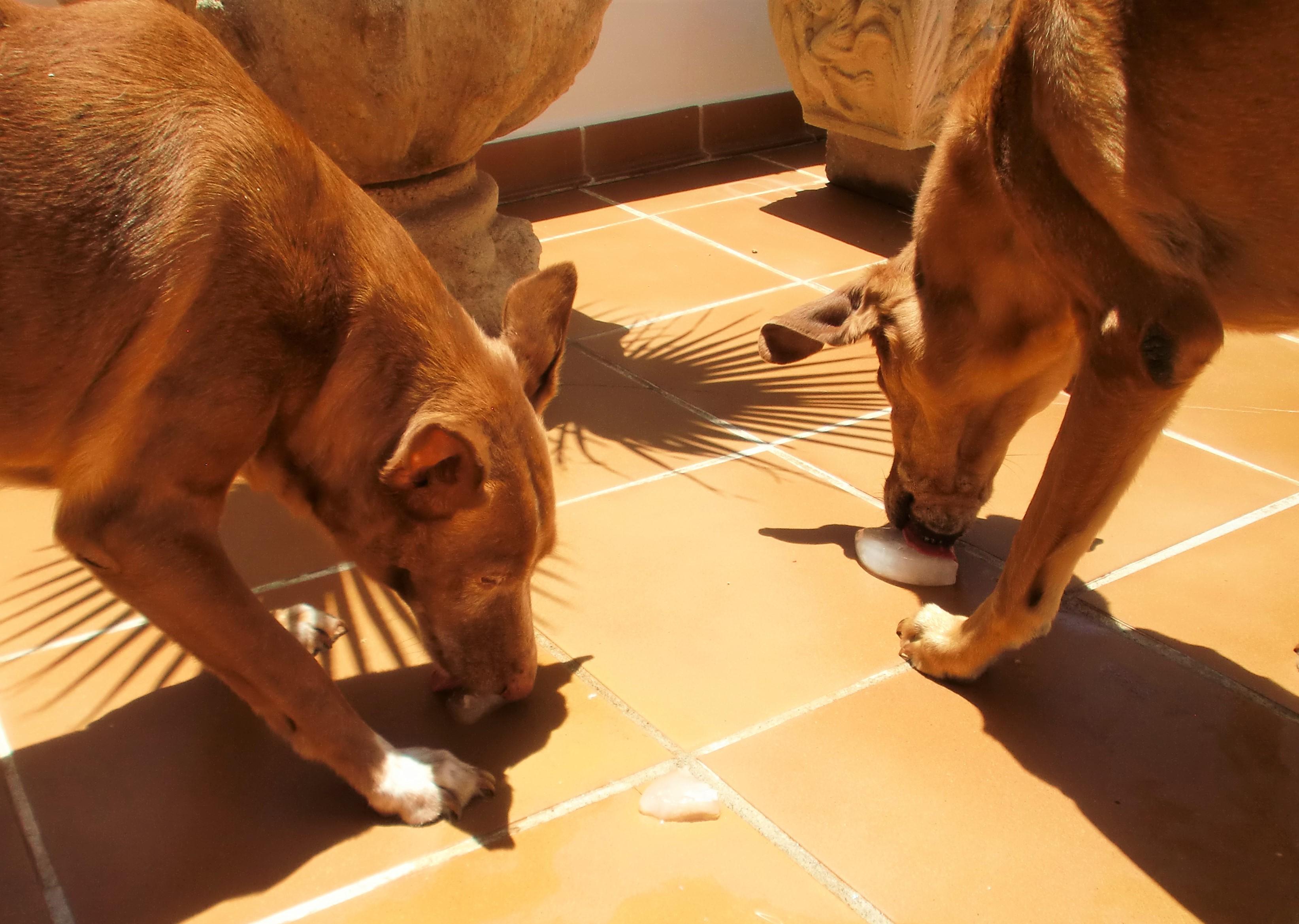 Ayudar Las Perros Superar Y Gatos Olas Para A 7 Ideas De Nuestros 67bgyvfY