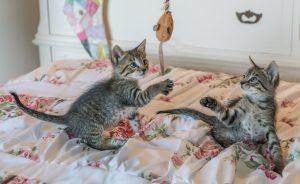 kittens-1534083_1920 (1)