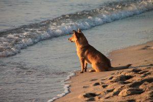 dog-87817_1920