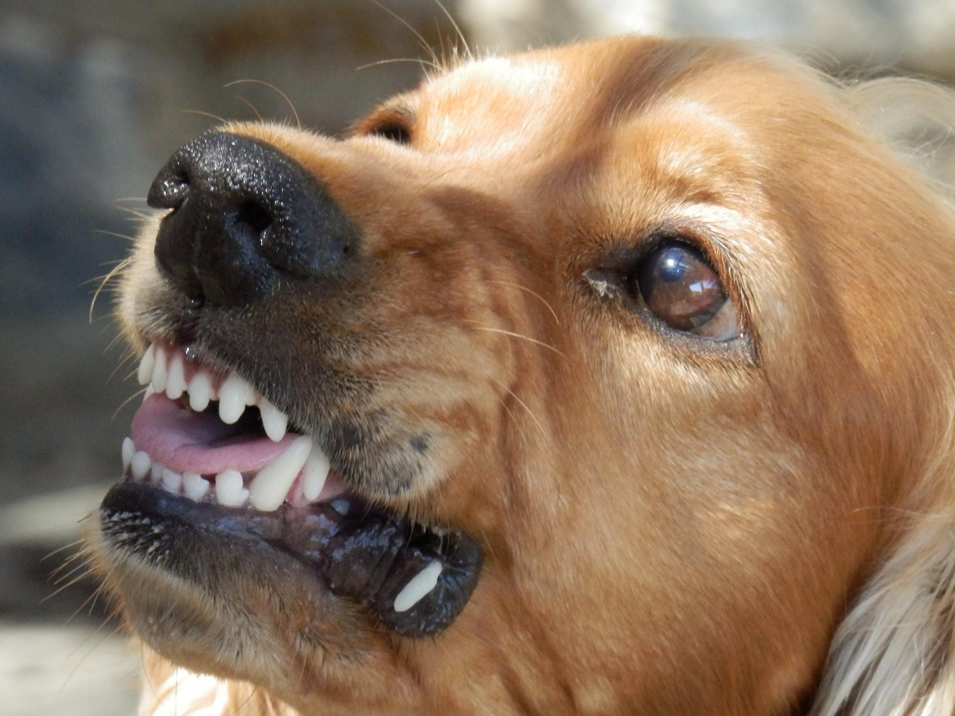 agresividad canina etología veterinaria comportamiento ebavet