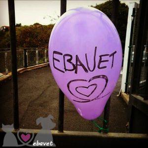 ebavet-1