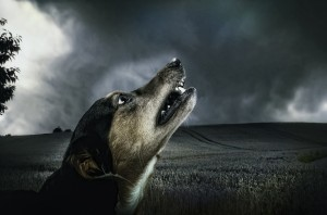dog-dark-howl-moonlight-66231