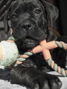 puppy-319517_1920