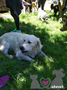 Fiesta para Perros en Ebavet