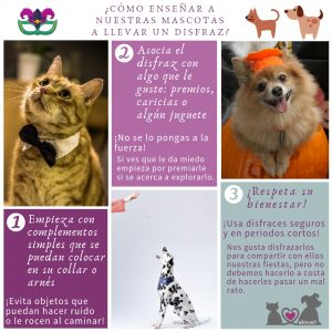 Como enseñar a tu mascota a llevar disfraz ebavet