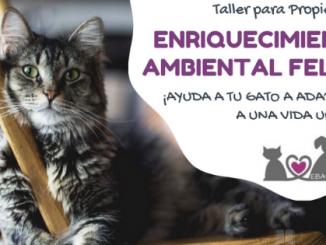 taller ebavet enriquecimiento ambiental felino