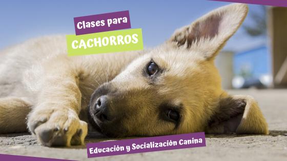 Clases para cachorros. Educación y Socialización Canina